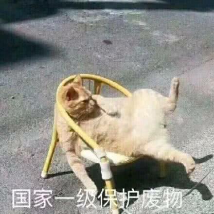 广东省潮州市湘桥到广东省深圳市龙岗物流货源信息